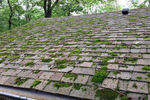 جلبک و خزه سقف شینگل